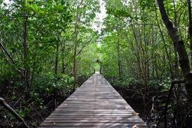 1Day Tour to Malay Kampong Home Visit and Mangrove Nature Park