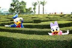 Hong Kong + Ocean Park and Disneyland tour