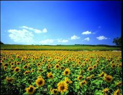 Hokkaido Floral Fantasy tour
