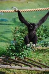 Eco-Tour With Flight Of The Gibbon Adventure tour
