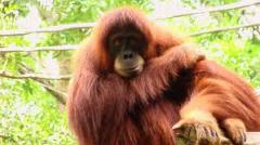Singapore Zoo and Night Safari tour