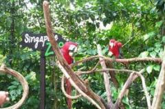 Singapore Bird Park and Night Safari tour