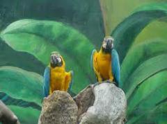 Singapore Bird Park Tour