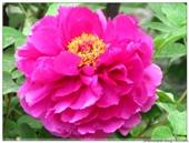 Henan Shandong Flower Admiring Tour