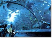 Sentosa Underwater World Tour