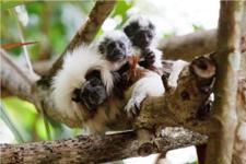 Singapore day zoo tour