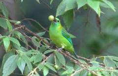 Kenong Rimba National Park Taman Negara tour