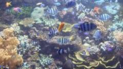 Sentosa with underwater world tour