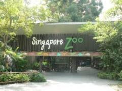 Singapore Morning @ The Zoo Tour