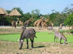 Tarangire / Ngorongoro / Lake Manyara Camping Safaries tour