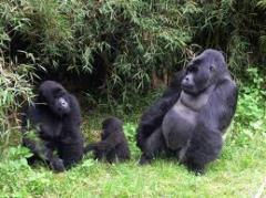 Gorilla Trek Bwindi National Park tour