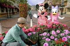 Disneyland & Universal studios tour
