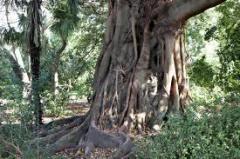 Banyan Tree Spa Indulgence Promo tour