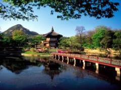 KOREA CHERRY BLOSSOM TRAIL TOUR