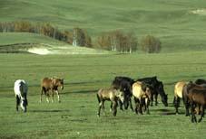 Inner Mongolia Grassland Tour